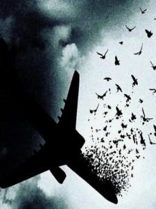 روایت سقوط هواپیمای اکراینی